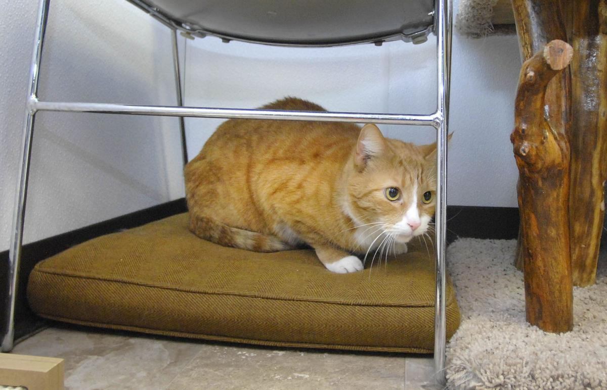 Cats For Adoption In Bloomington Il