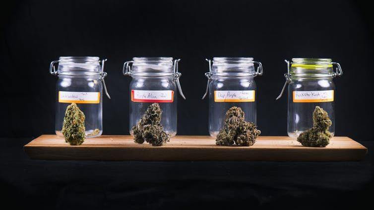 5 things to know about marijuana, CBD and your pet on pot