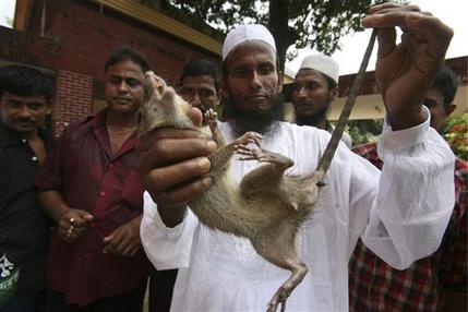 Bangladesh Champion Rat Killer