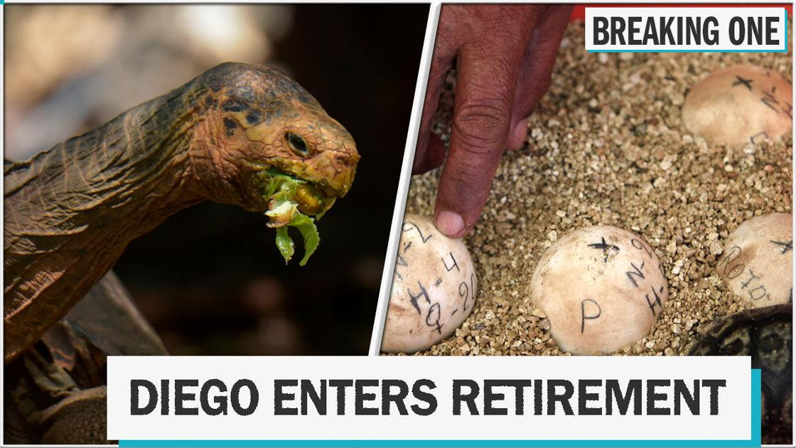 Tortoise's high sex drive saves his species, 'dinosaur trees,' and more things you might have missed this week
