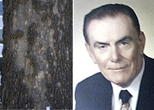 Dead mayor's likeness found in tree trunk