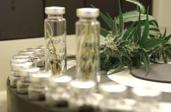 GW Pharmaceuticals Is No Longer the Largest Pure-Play Marijuana Stock -- This Is