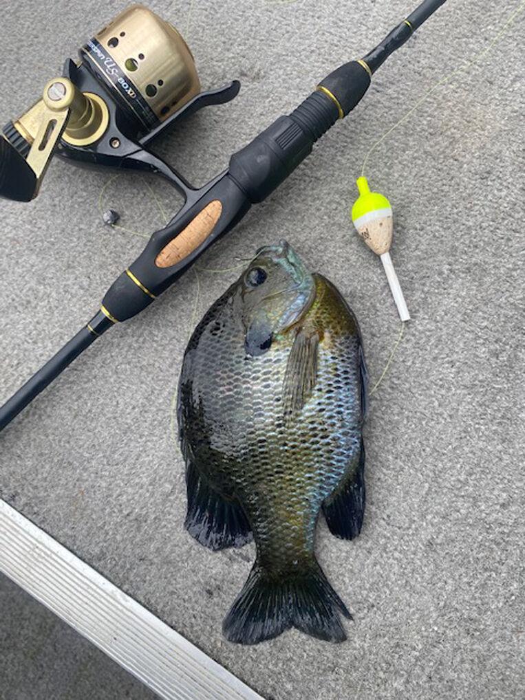 Late spring fishing scene heats up on Kentucky Lake