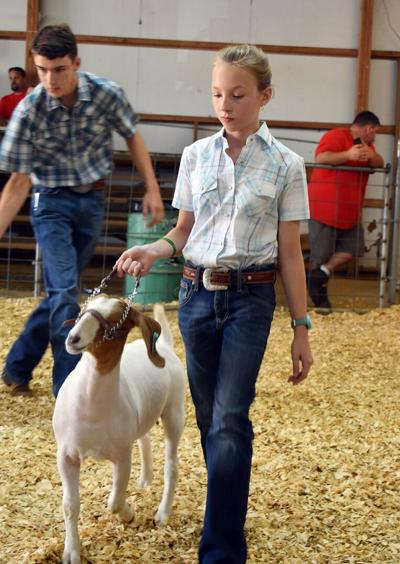 My 4-H goat project was exciting