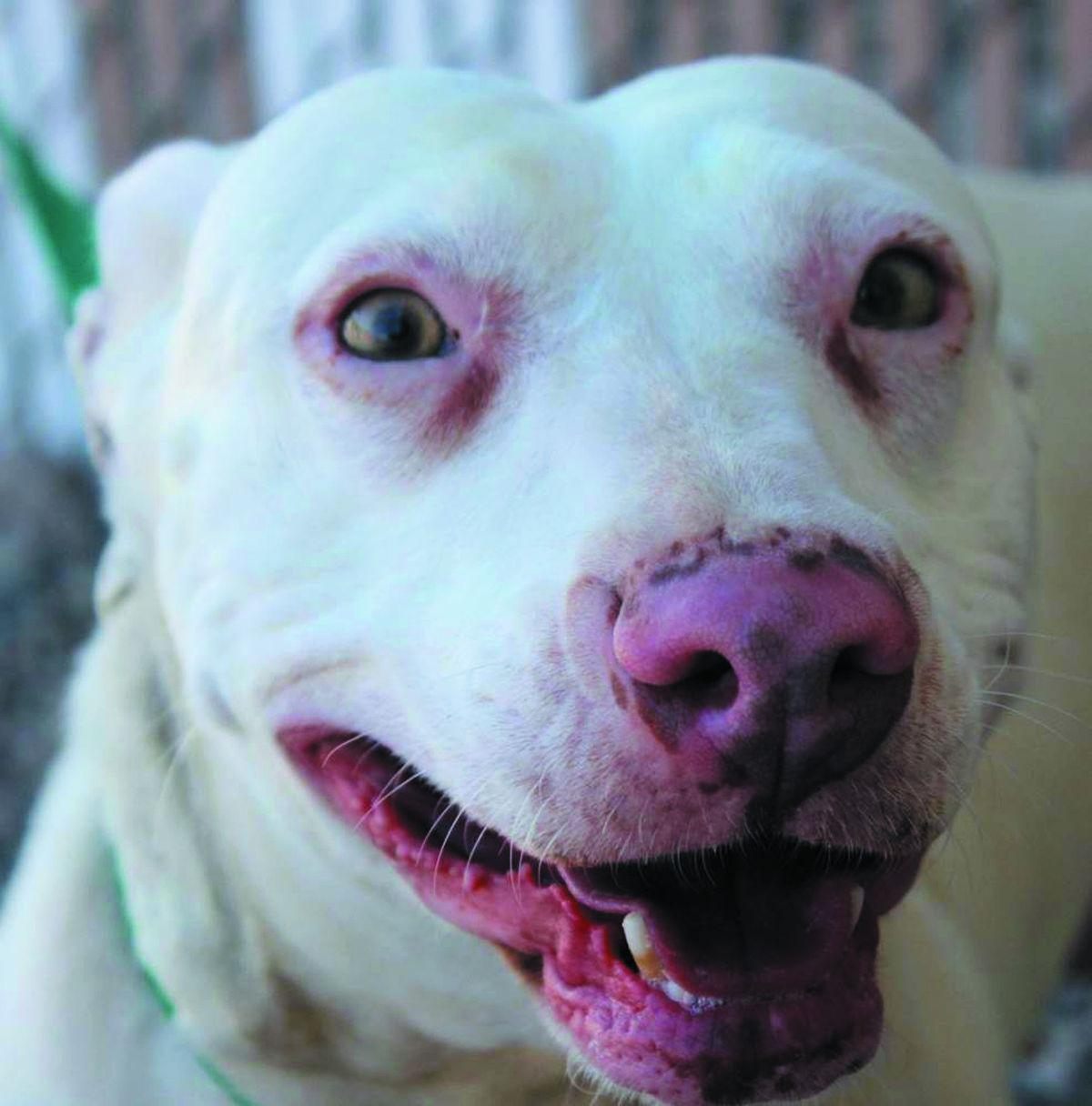 Foster Dogs Up For Adoption In Az