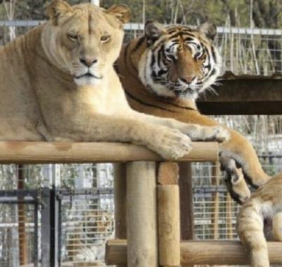 Outrage turns to zoo's real story
