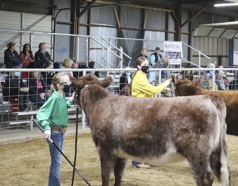 List is long of livestock winners
