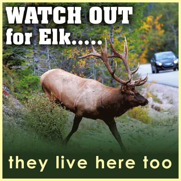 Watch Out for Elk