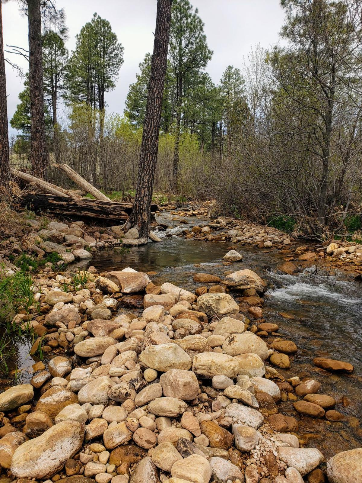 Canyon Creek.jpg