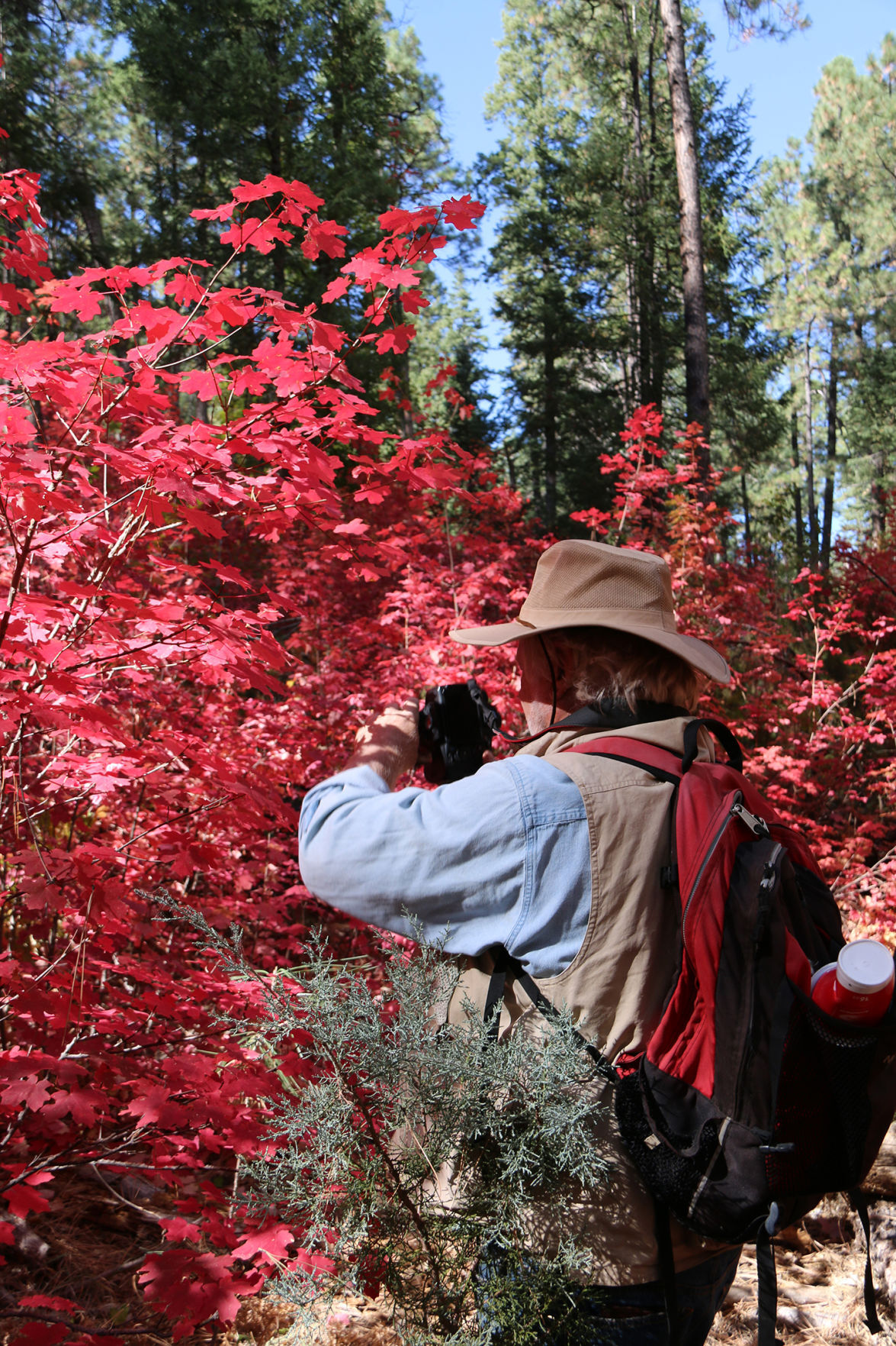 Photographing Fall Colors in See Canyon