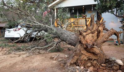 storm uproots tree