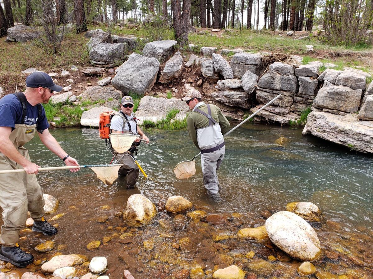 Electroshocking sampling in Canyon Creek by AZGFD.jpg