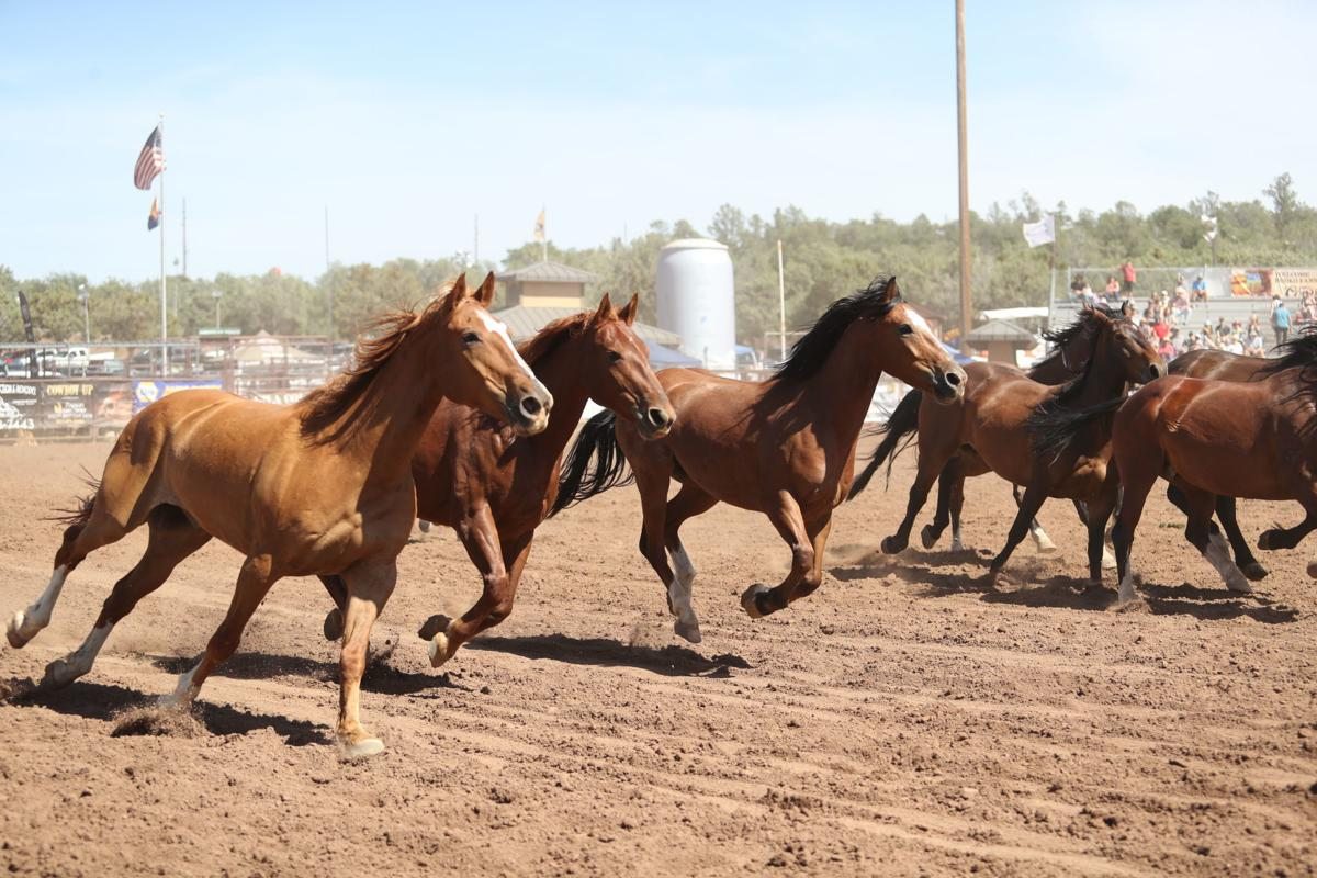Excitement And Energy At 2019 Rodeo Local News