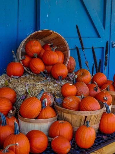 pumpkin V