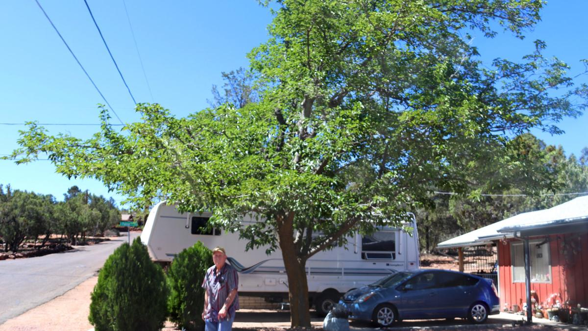 The APS tree trimming program in Payson
