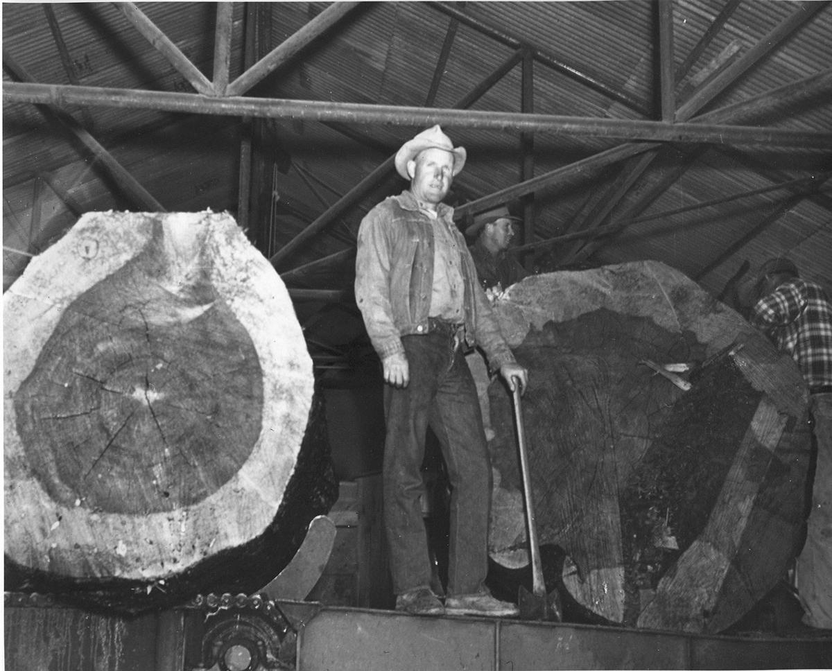 Giant logs at Payson Lumber Mill
