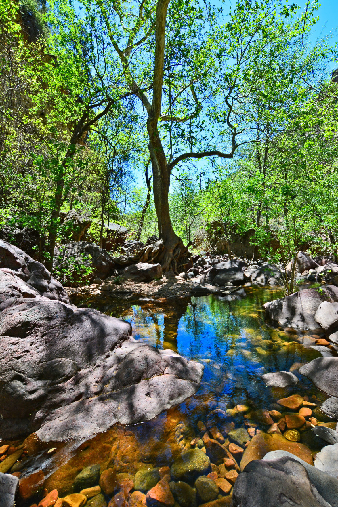 Pine Creek Trail TNB DSC_6389 4K res personal photo Pia Wyer.jpg