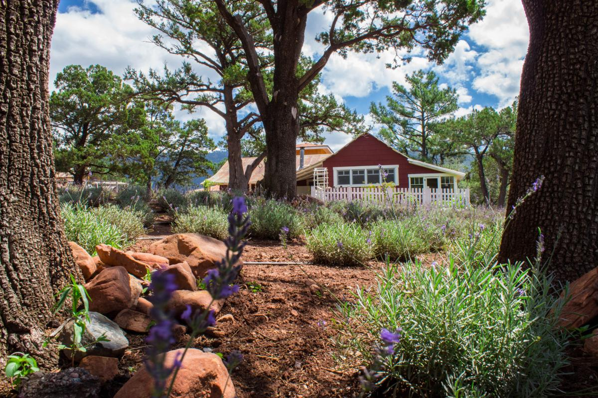 Pine Lavender Farm first Certified Naturally Grown farm in Arizona