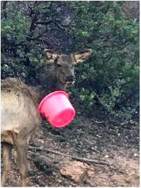Elk with bucket