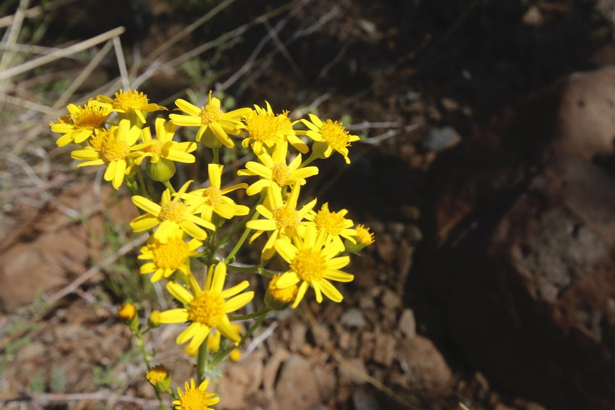 Yellow flowers on AZT/Highling