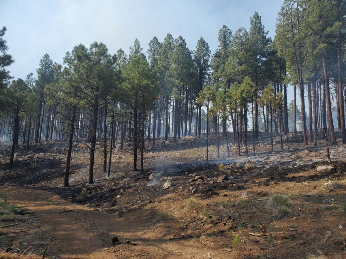 Boggy Creek Fire