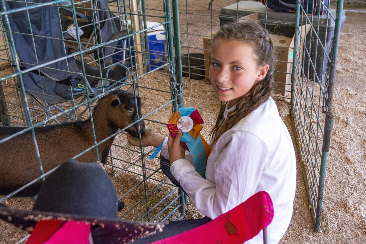 N Gila County Fair lifestock