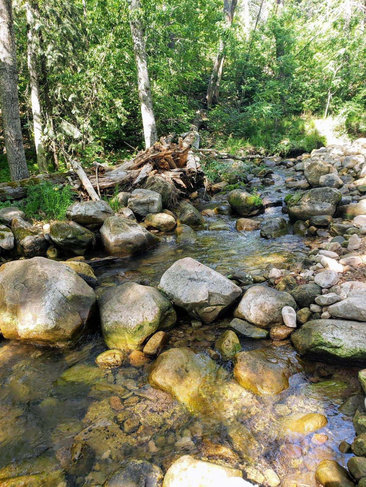 Upper Canyon Creek.jpg