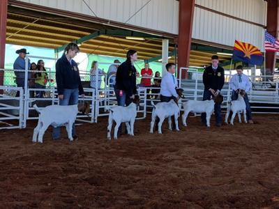kids and livestock