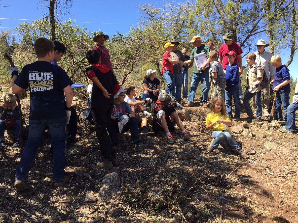 Boy scout thinning project