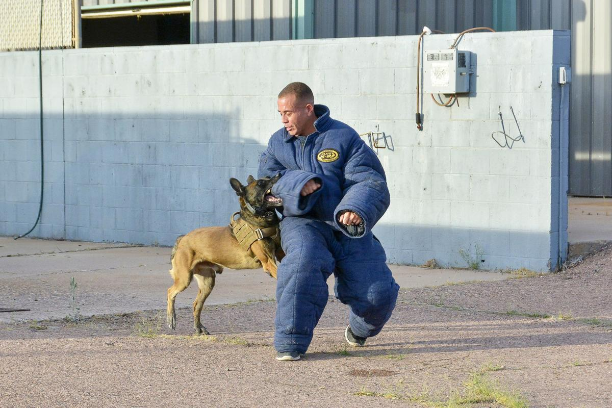K9 Training