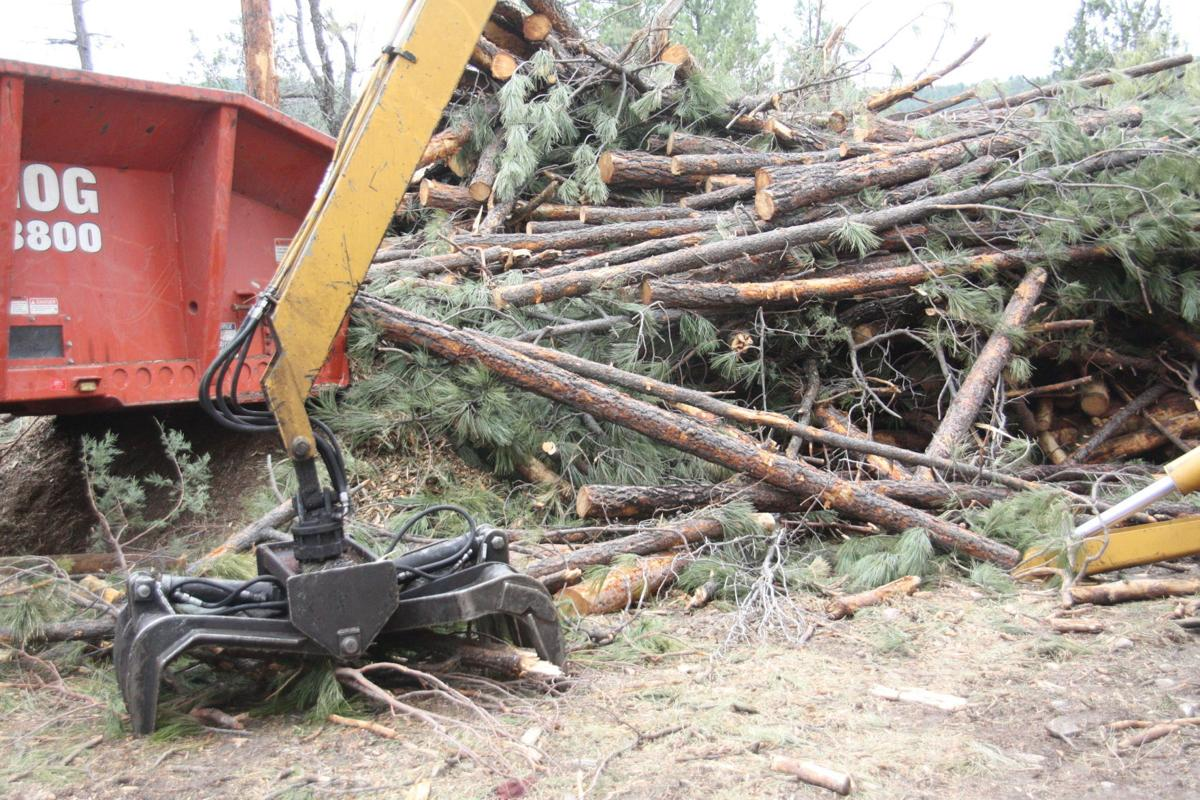 Thinning the Forest Tonto Forest plan