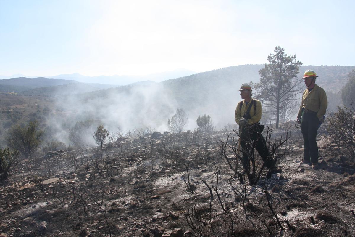Prescribed burns benefit forest