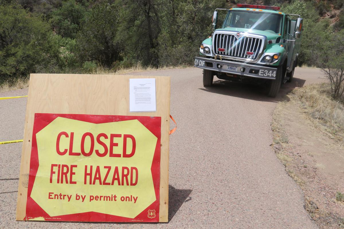 Forest Closure pictures