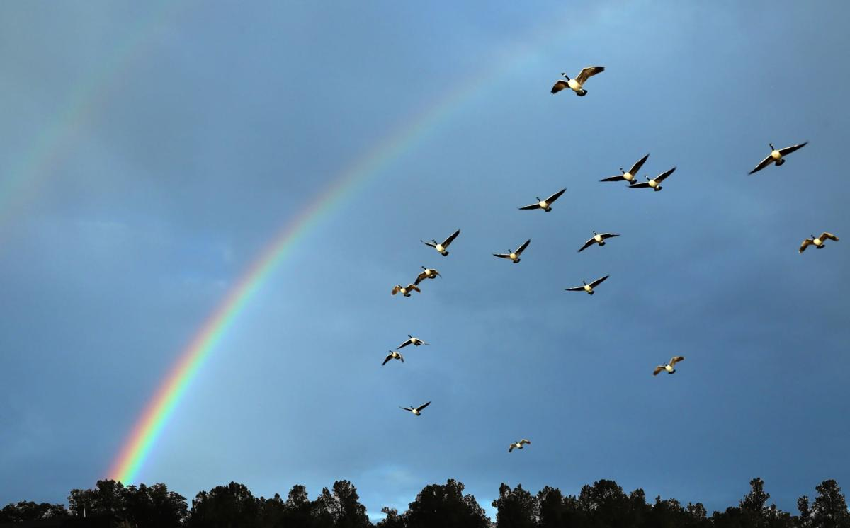 Geese and rainbow