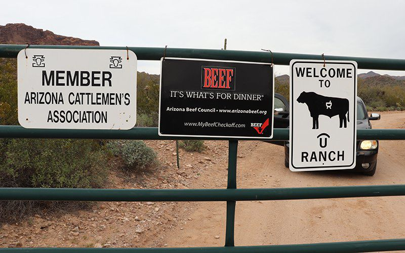 Arizona cattle rancher uses science to beef up industry
