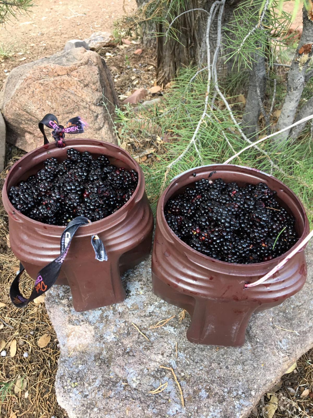 Dennis Pirch-Blackberries