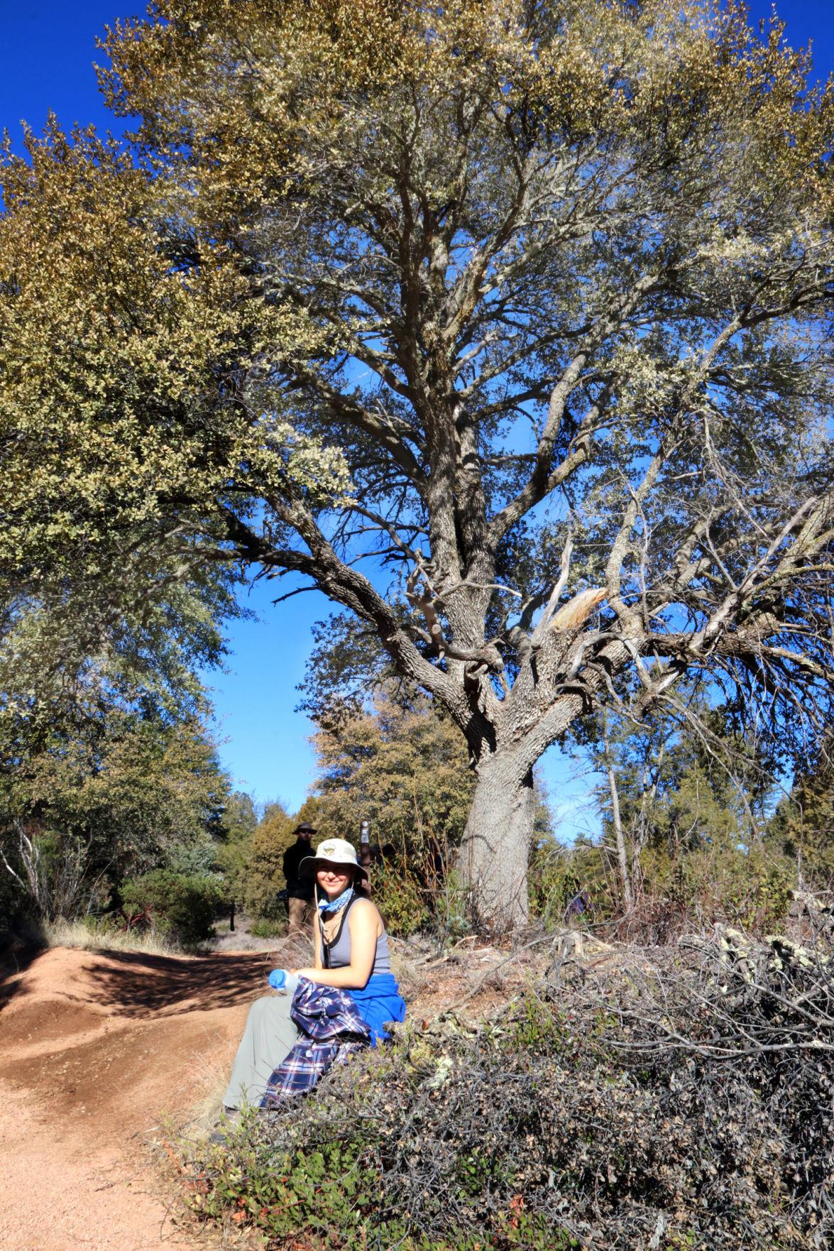 Brooke under tree on Monument Peak Loop trail