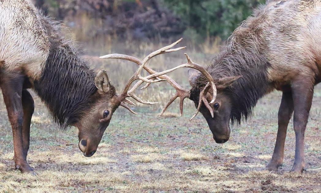 the antlers hospice zip