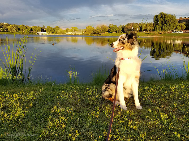 Luna enjoying an afternoon walk in Green Valley Park