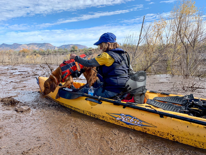Dog searching from boat