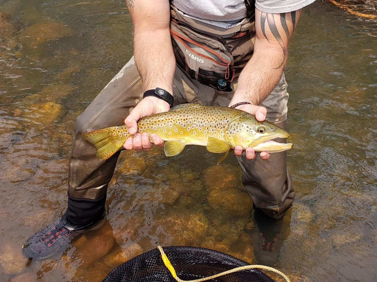 one of several large trout sampled and returned to Canyon Creek by AZGFD during their annual survey to determine health of Canyon Creek. 22 inch brown trout.jpg