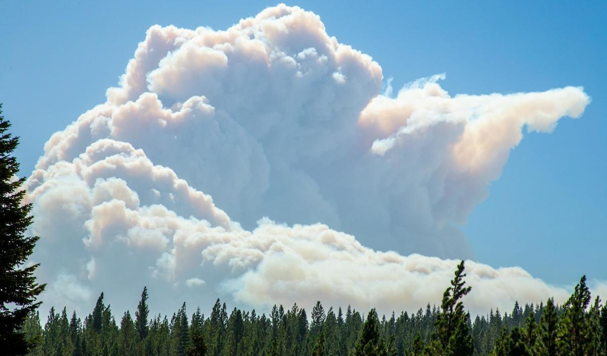 North Complex Fire in California