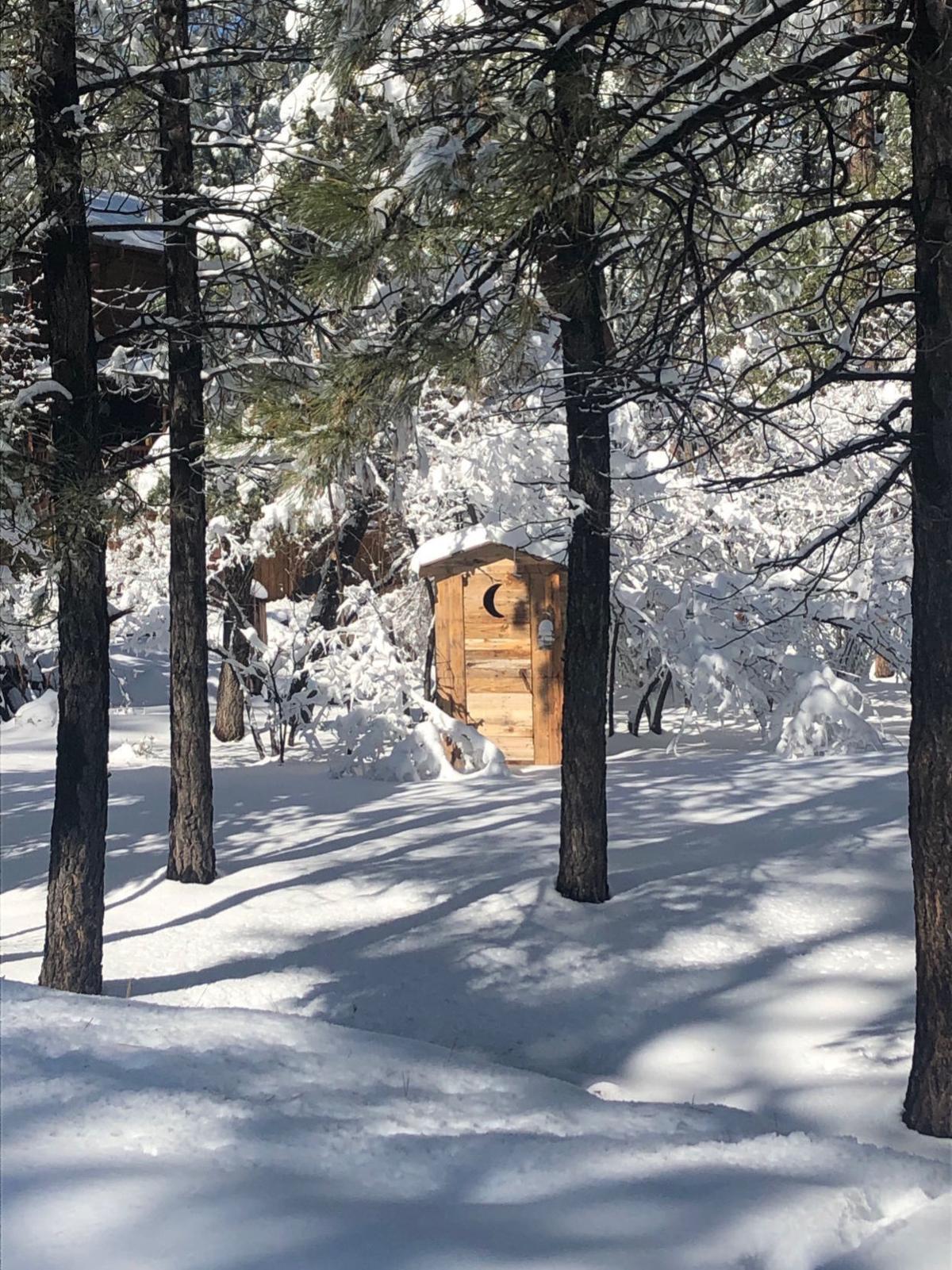pine snow.jpg