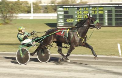 Dunacton Gale and driver Phil Pinkney in one of their many wins in Charlottetown