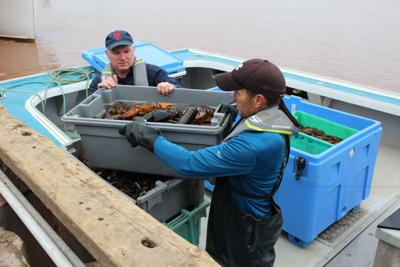 Fall lobster season ends on a high note