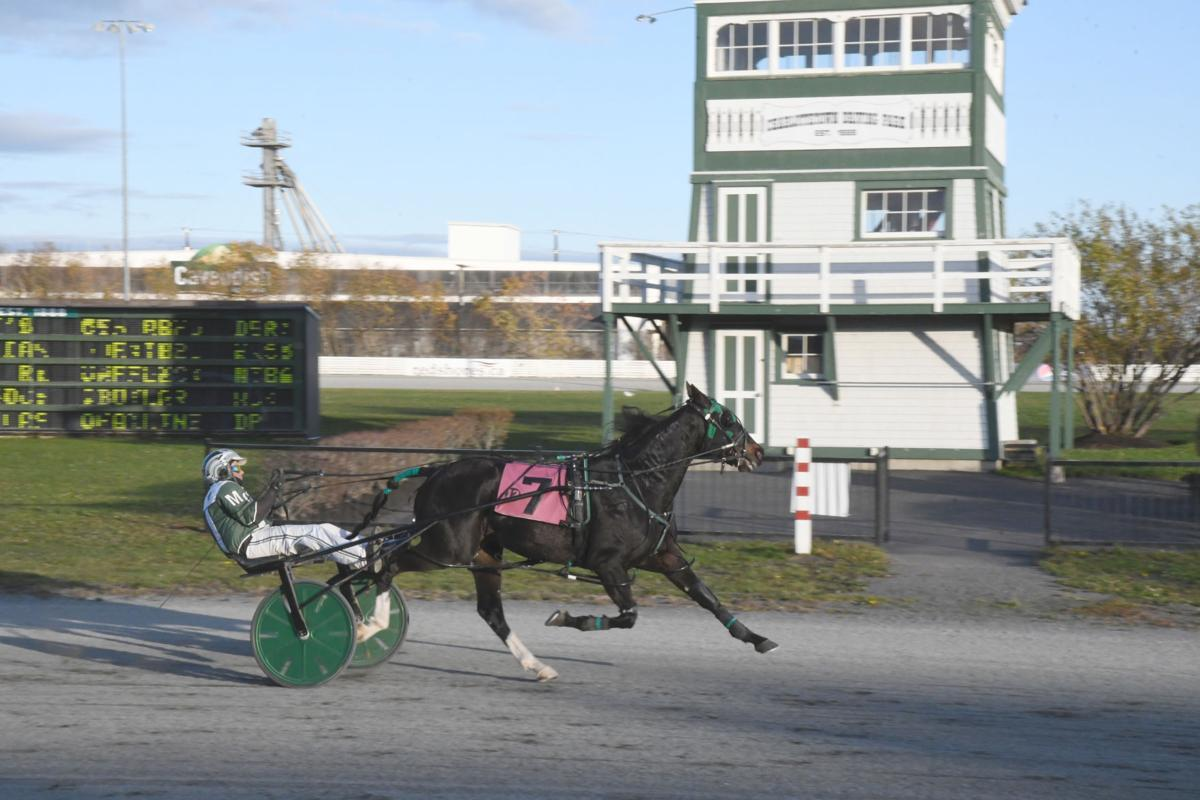 Rose Run Quest, PEISHOA Horse Of The Year