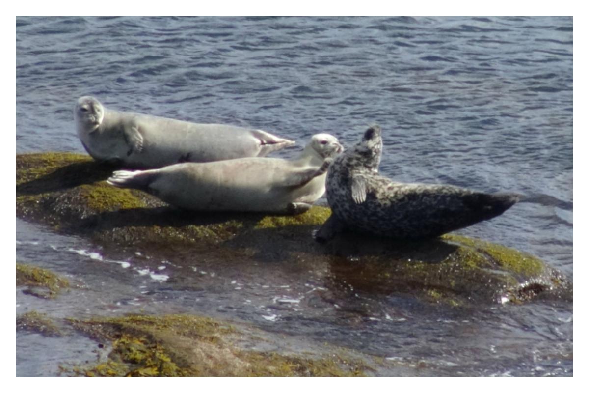 Seals photosb.jpg