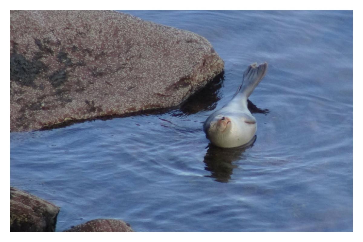Seals photosb2.jpg