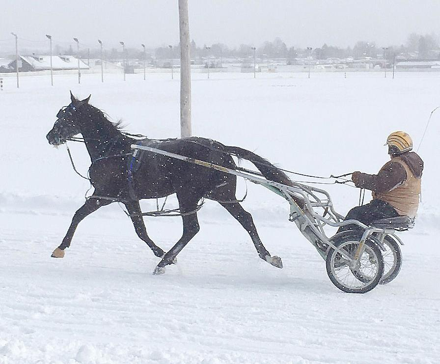 Emmons MacKay and his Shadow Play colt out for a winter jog.
