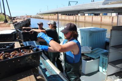Most lobster fishers doing well for 2019 fall season